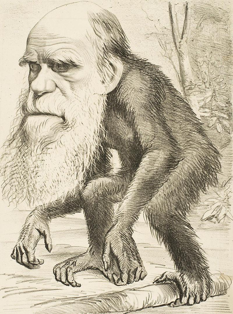 Charles Darwin aveva ragione | Leggerò Leggero