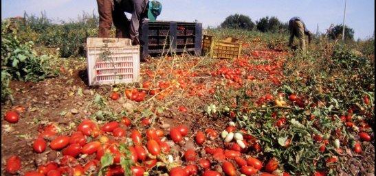 caporalato-pomodori